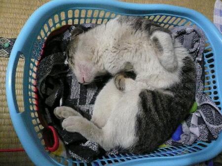 2009-06-05猫2.jpg
