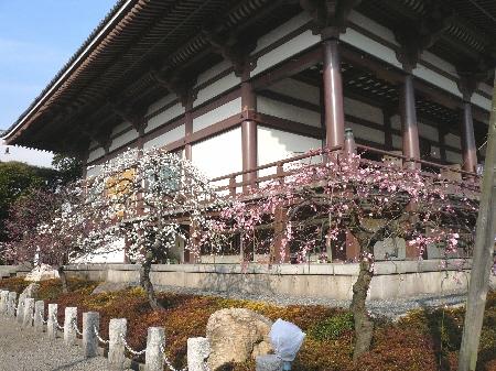 2008-03-04梅1.jpg